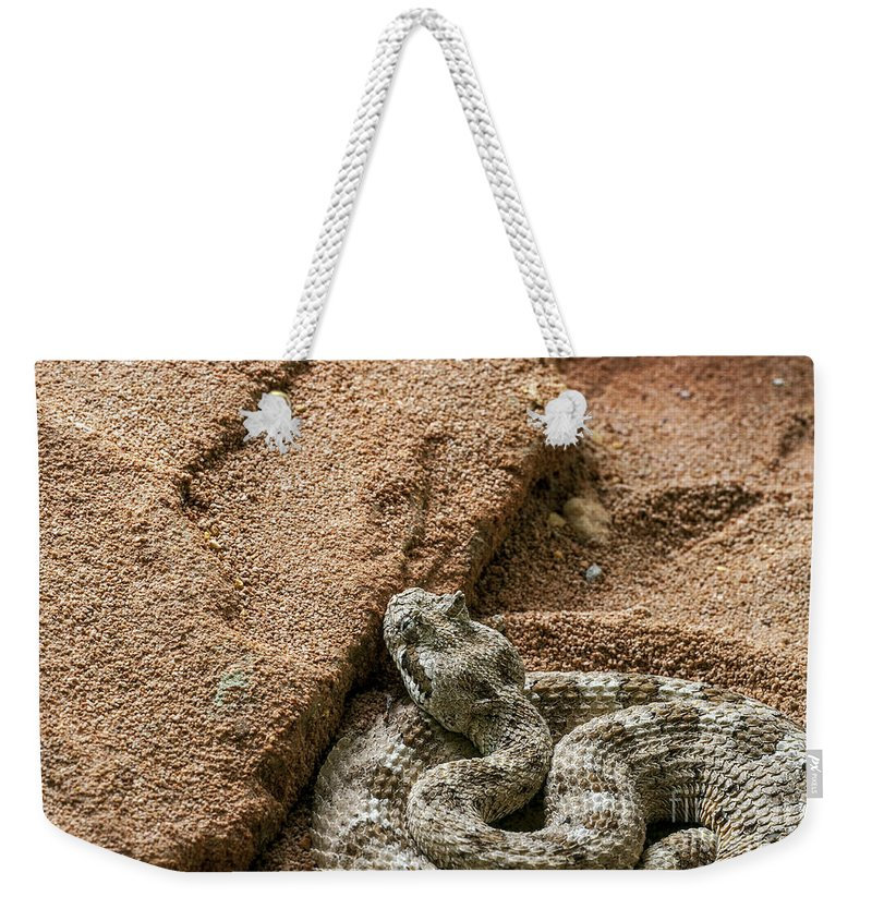 Sidewinder Weekender Tote Bag featuring the photograph Sidewinder 1 by Arterra Picture Library
