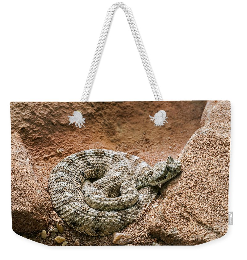 Sidewinder Weekender Tote Bag featuring the photograph Sidewinder 2 by Arterra Picture Library