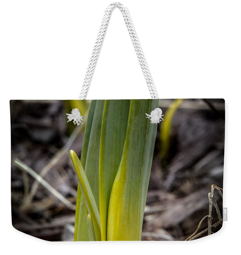 Yellow Weekender Tote Bag featuring the photograph Sign Of Spring 2 by Ronald Grogan