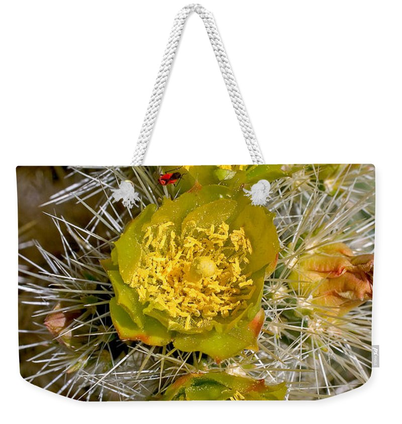 Nature. Silver Cholla Weekender Tote Bag featuring the photograph Silver Cholla Cactus by David Salter