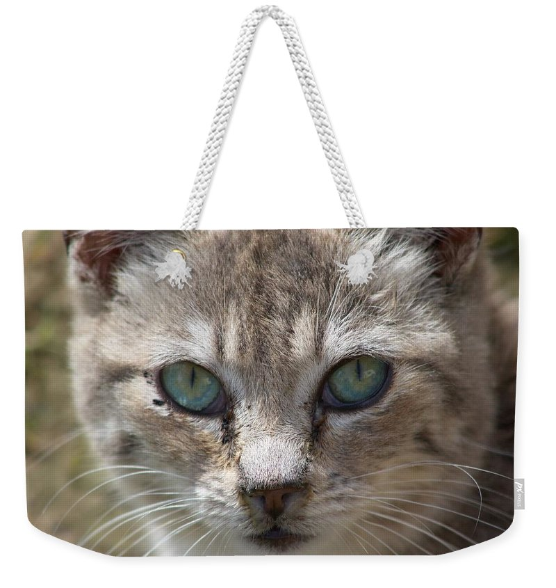 Cat Weekender Tote Bag featuring the photograph Silver Tabby But What Color Eyes by Chriss Pagani