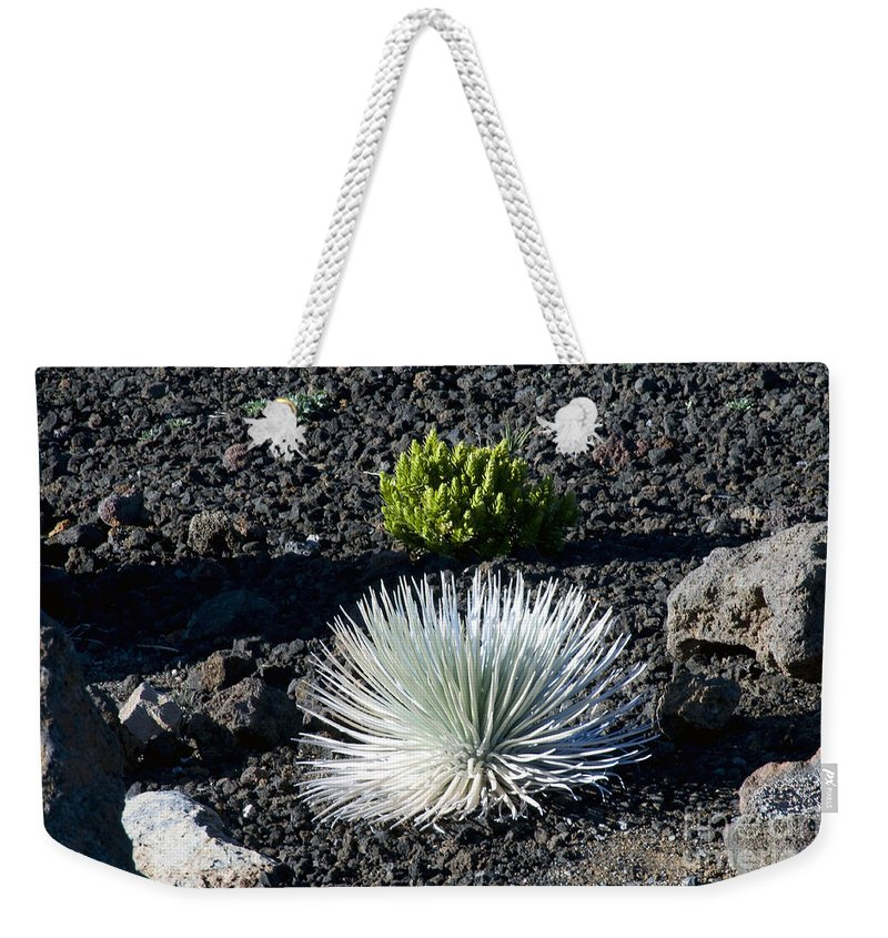 Silversword Plant Plants Leaf Leaves Volcanic Rock Rocks Haleakala National Park Volcano Area Maui Hawaii Parks Nature Greensward Succulent Succulents Weekender Tote Bag featuring the photograph Silversword Plant by Bob Phillips
