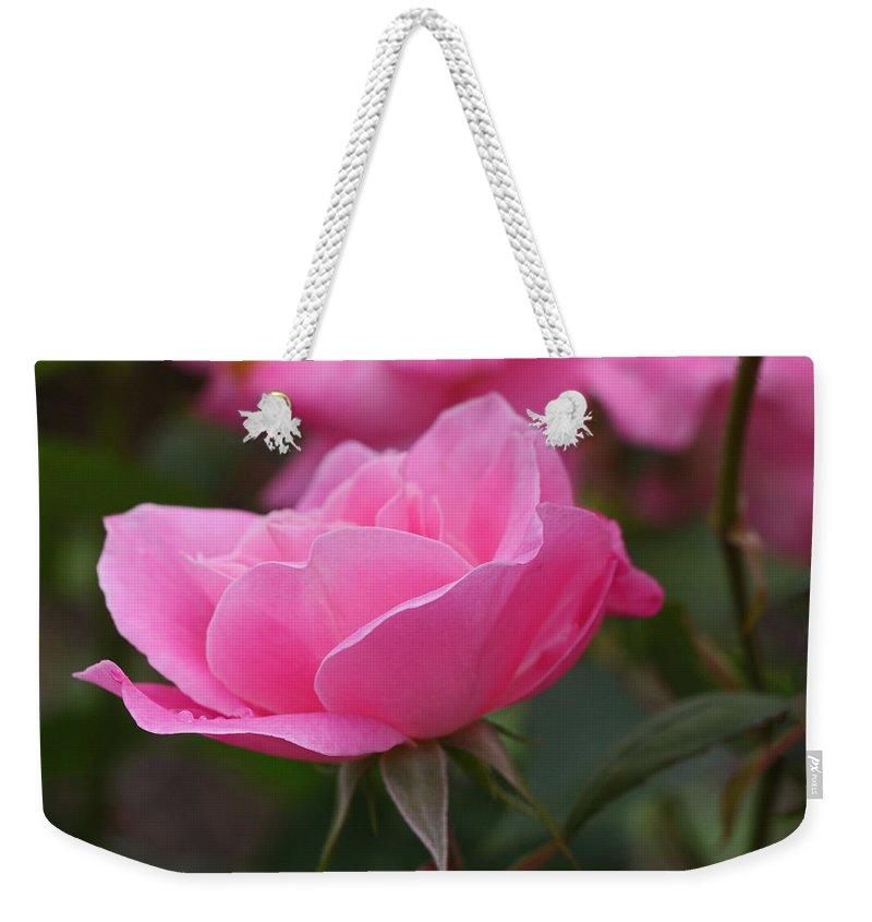 Simplicity Rose Weekender Tote Bag featuring the photograph Simplicity Floribunda Rose by Allen Beatty