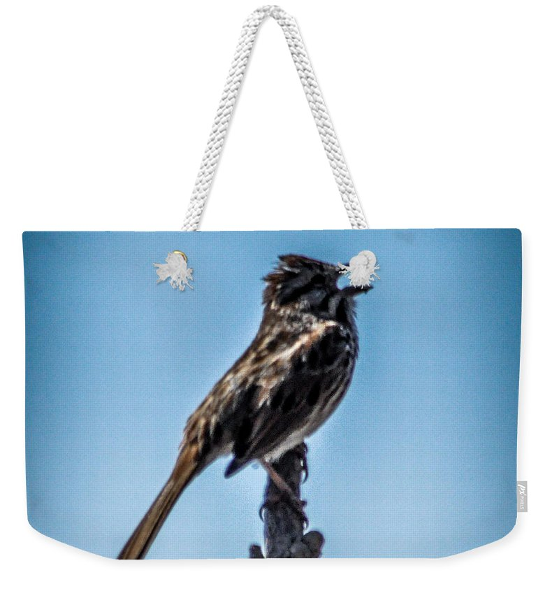 Sparrow Weekender Tote Bag featuring the photograph Singing Song Sparrow by Ronald Grogan