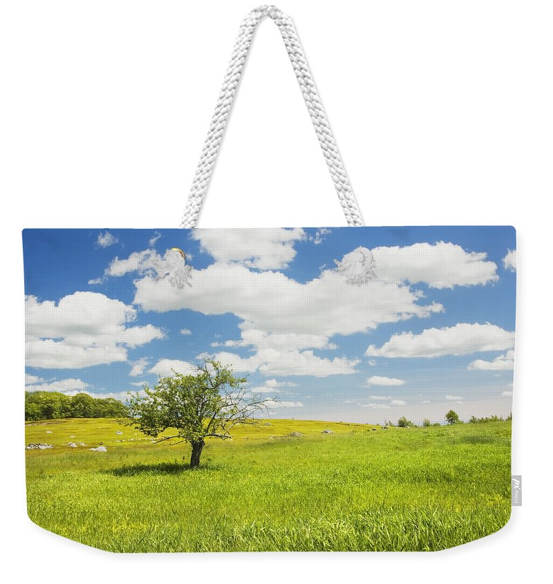 Field Weekender Tote Bag featuring the photograph Single Apple Tree In Maine Blueberry Field by Keith Webber Jr