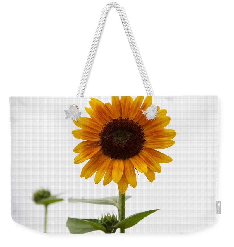 Sunflower Weekender Tote Bag featuring the photograph Single Sunflower by Alice Gipson