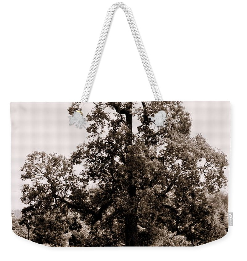 Tree Weekender Tote Bag featuring the photograph Single Tree Journey by Kathy Sampson