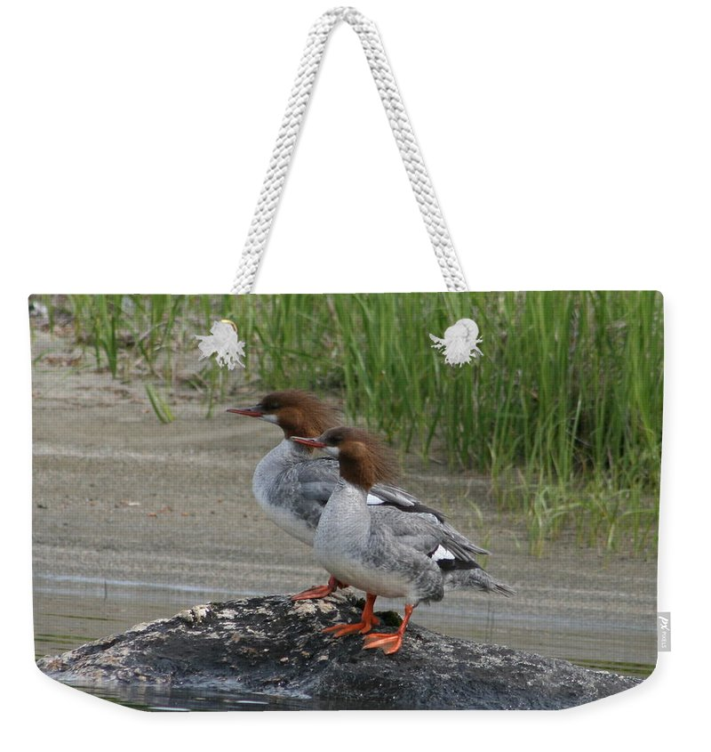 Bird Weekender Tote Bag featuring the photograph Sisters Of Lake Umbagog by Neal Eslinger