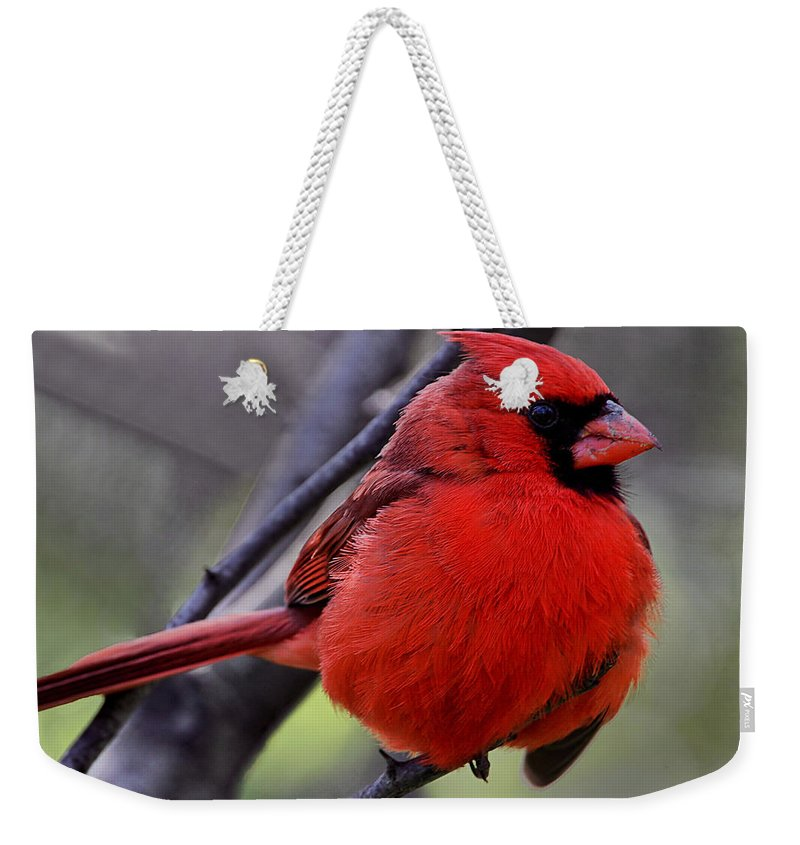 Bird Weekender Tote Bag featuring the photograph Sitting Pretty 2 by John Absher