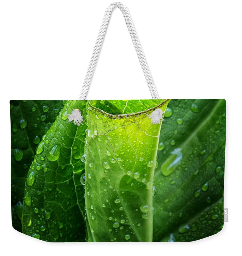 Skunk Cabbage Weekender Tote Bag featuring the photograph Skunk Cabbage by Bill Wakeley