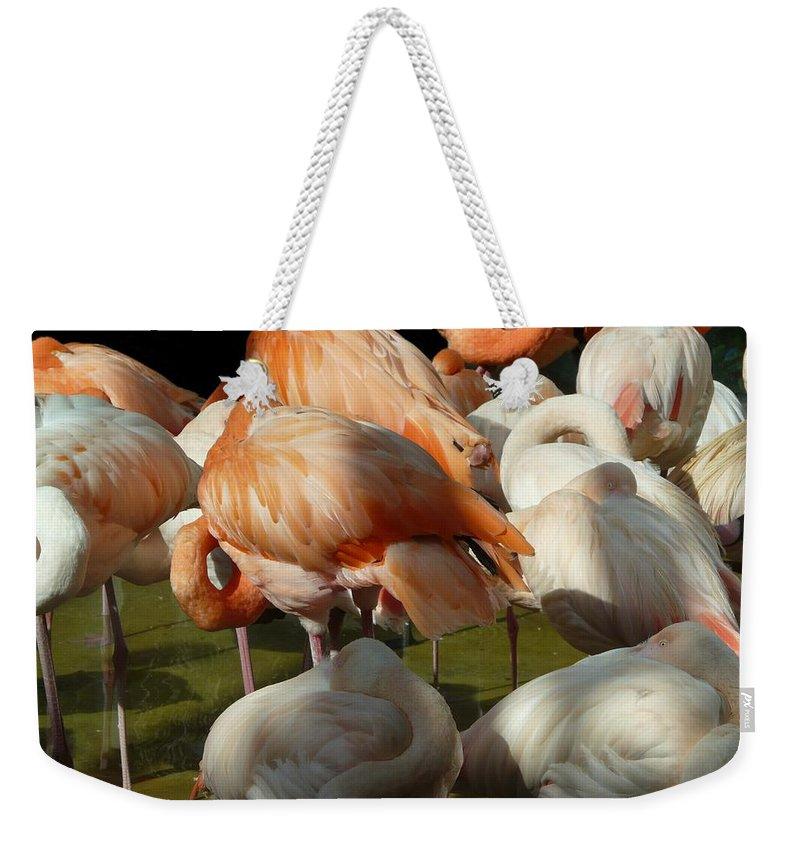 Bird Weekender Tote Bag featuring the photograph Sleeping Beauties by Valerie Ornstein