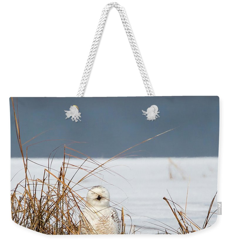 Owl Weekender Tote Bag featuring the photograph Sleeping Beauty Square by Bill Wakeley