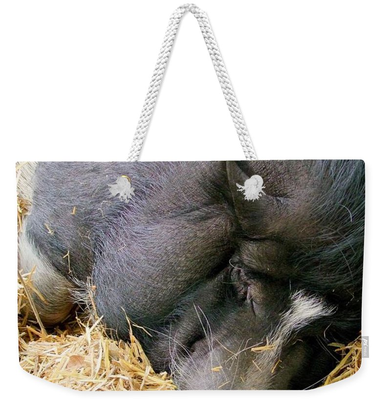 Pig Weekender Tote Bag featuring the photograph Sleeping Sow by Mary Deal