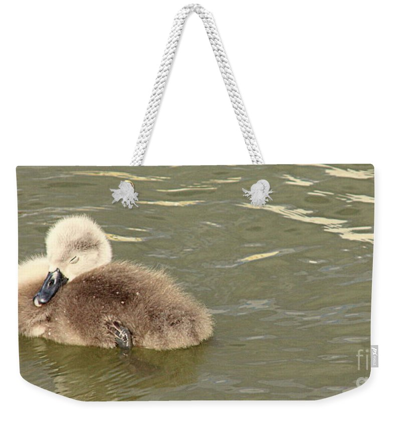 Linsey Williams Prints Weekender Tote Bag featuring the photograph Sleepy Cygnet by Linsey Williams