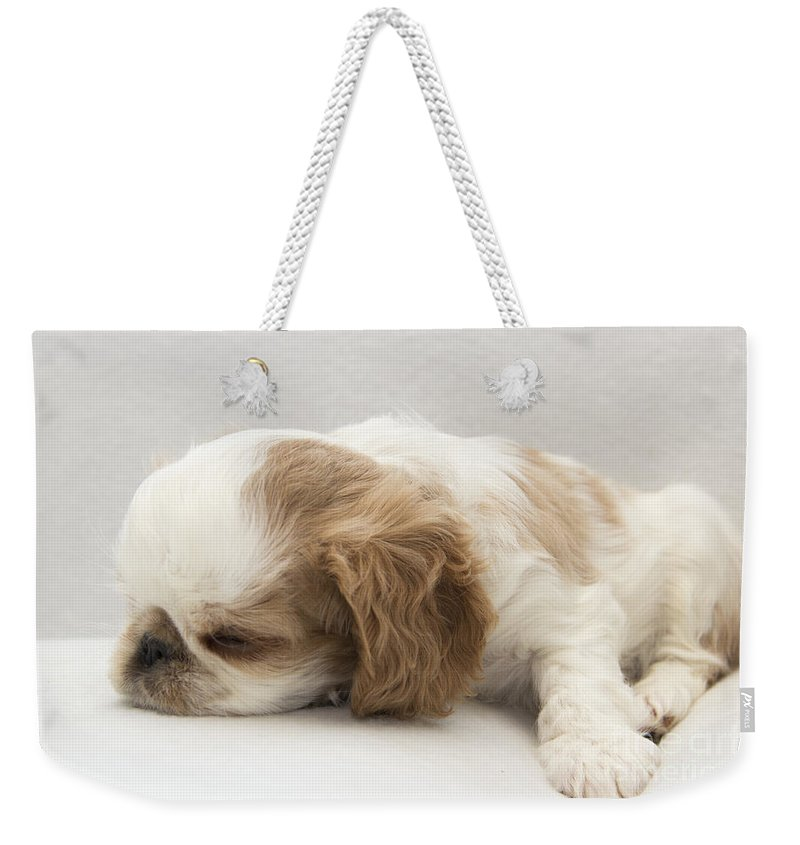 Puppy Weekender Tote Bag featuring the photograph Sleepy Head by Jeannette Hunt
