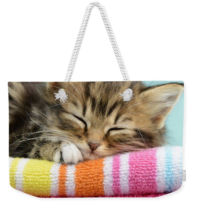 Tabbies Weekender Tote Bag featuring the digital art Sleepy Kitten by MGL Meiklejohn Graphics Licensing
