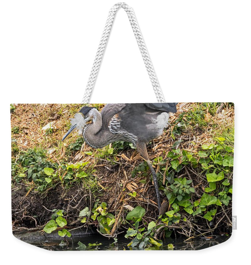 Bird Weekender Tote Bag featuring the photograph Slip Sliding by Kate Brown