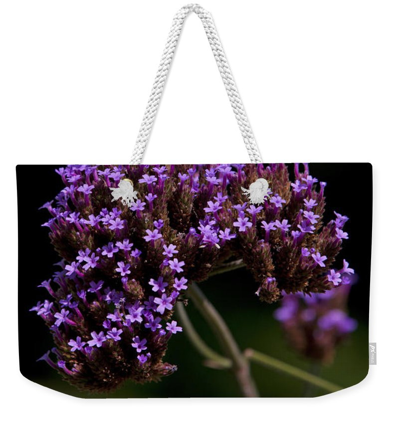 Verbena Weekender Tote Bag featuring the photograph Small Purple Flowers On A Verbena Plant by Jason O Watson