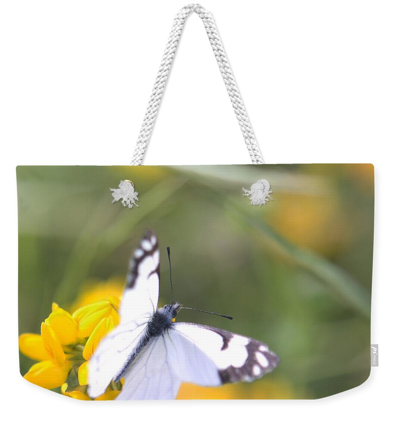 Nature Weekender Tote Bag featuring the photograph Small White Butterfly On Yellow Flower by Belinda Greb