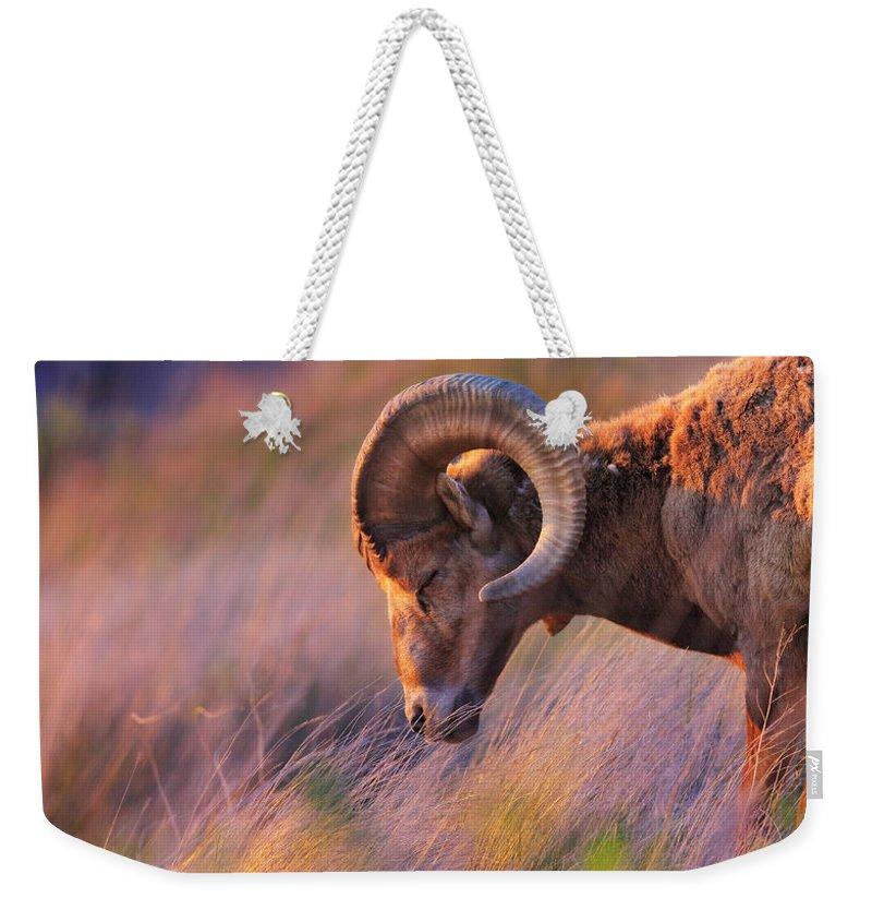 Bighorn Sheep Weekender Tote Bags