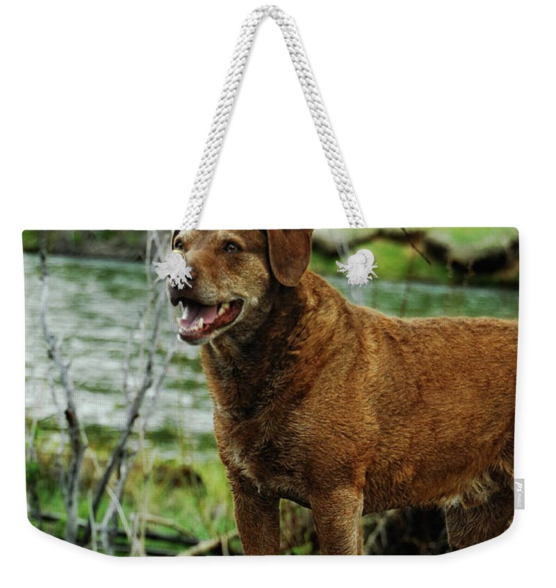 Dog Weekender Tote Bag featuring the photograph Smile Now by Donna Blackhall