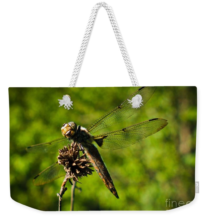 Weekender Tote Bag featuring the photograph Smiling Dragonfly by Cheryl Baxter