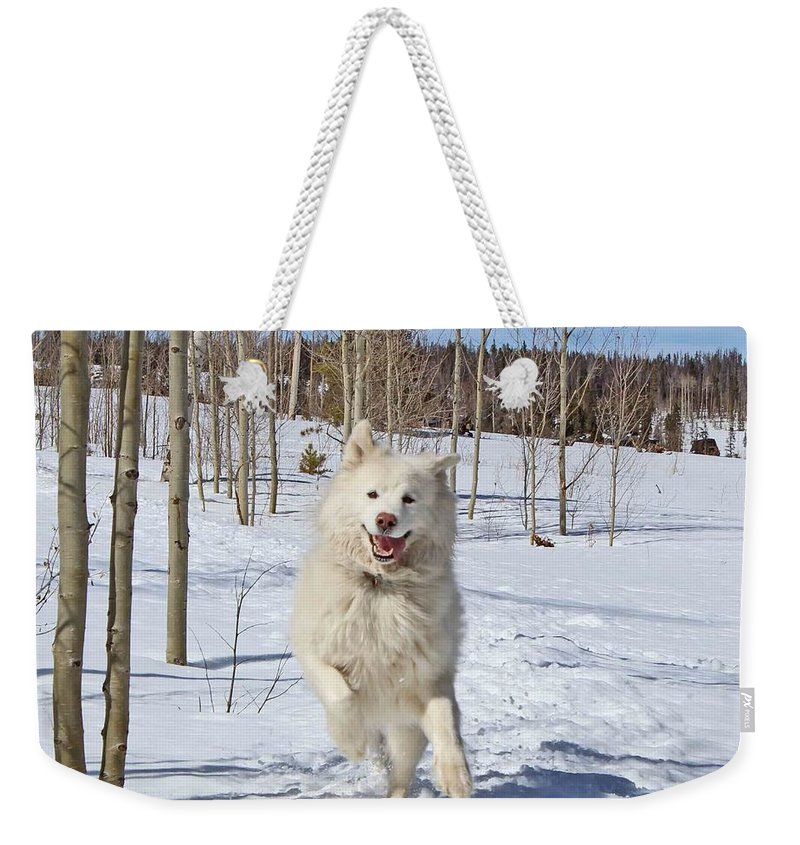 Samoyed Weekender Tote Bag featuring the photograph Smiling From Ear To Ear by Fiona Kennard