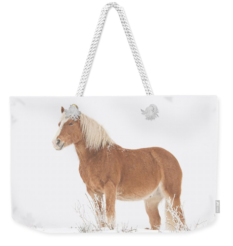 Palomino Weekender Tote Bag featuring the photograph Smiling Palomino In The Snow by James BO Insogna