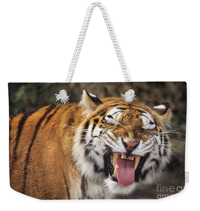 Siberian Tiger Weekender Tote Bag featuring the photograph Smiling Tiger Endangered Species Wildlife Rescue by Dave Welling