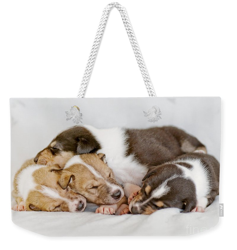 Collie Weekender Tote Bag featuring the photograph Smooth Collie Puppies Taking A Nap by Martin Capek