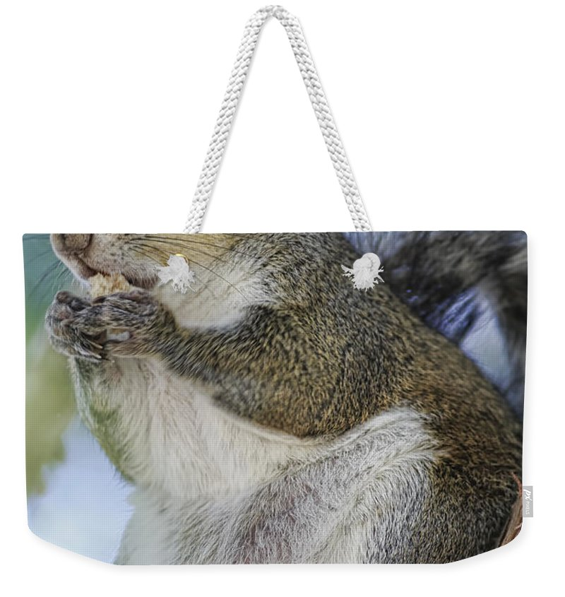 Squirrel Weekender Tote Bag featuring the photograph Snack Time by Deborah Benoit
