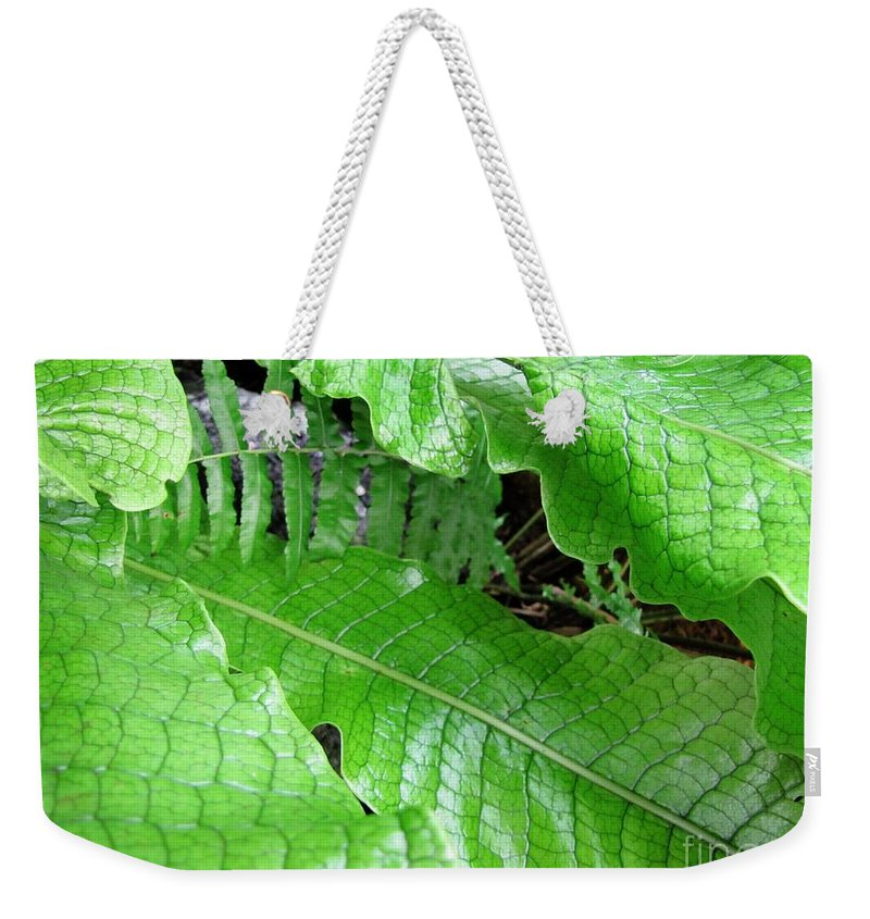 Snake Weekender Tote Bag featuring the photograph Snake Skin Plant by Jennifer Wheatley Wolf