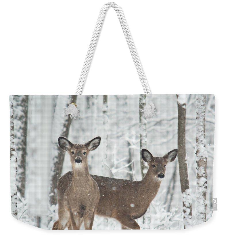 Deer Weekender Tote Bag featuring the photograph Snow Deer by Douglas Barnett