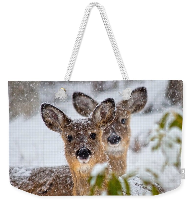 Deer Weekender Tote Bag featuring the photograph Snow Does by Betsy Knapp