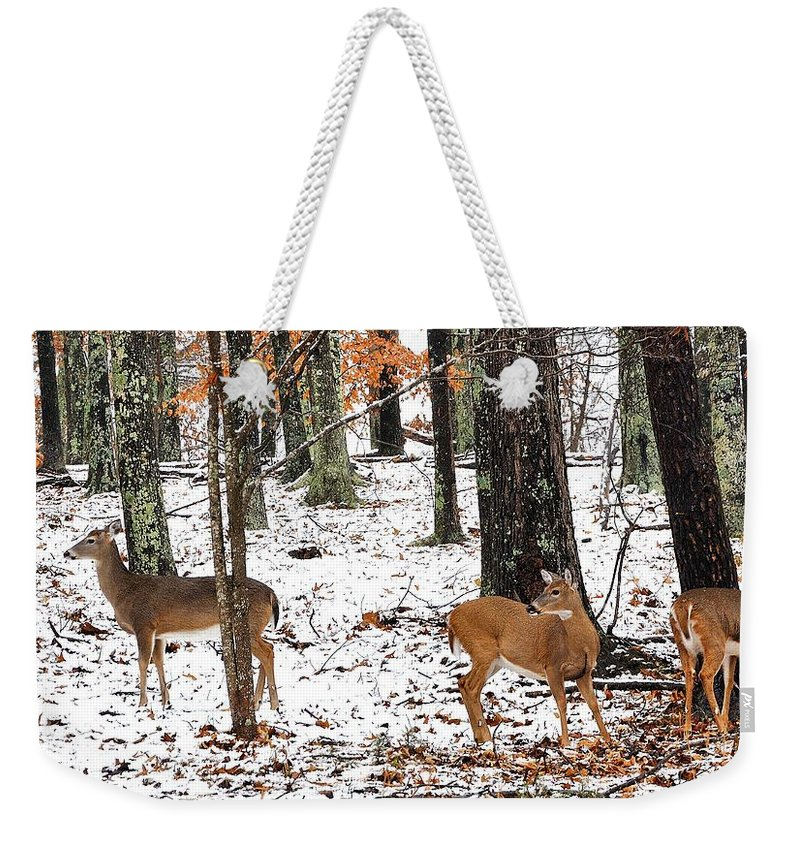Whitetail Doe Weekender Tote Bag featuring the photograph Snow Doe's by Todd Hostetter