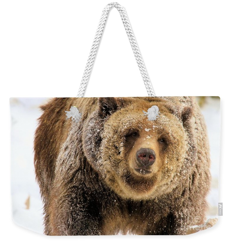 Grizzly Bear Weekender Tote Bag featuring the photograph Snow Face by Adam Jewell