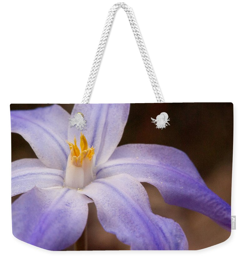 Plantae Weekender Tote Bag featuring the photograph Snow Glories 2 by Douglas Barnett