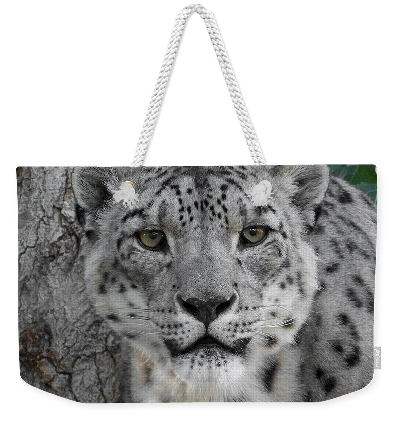 Animals Weekender Tote Bag featuring the photograph Snow Leopard 5 by Ernie Echols