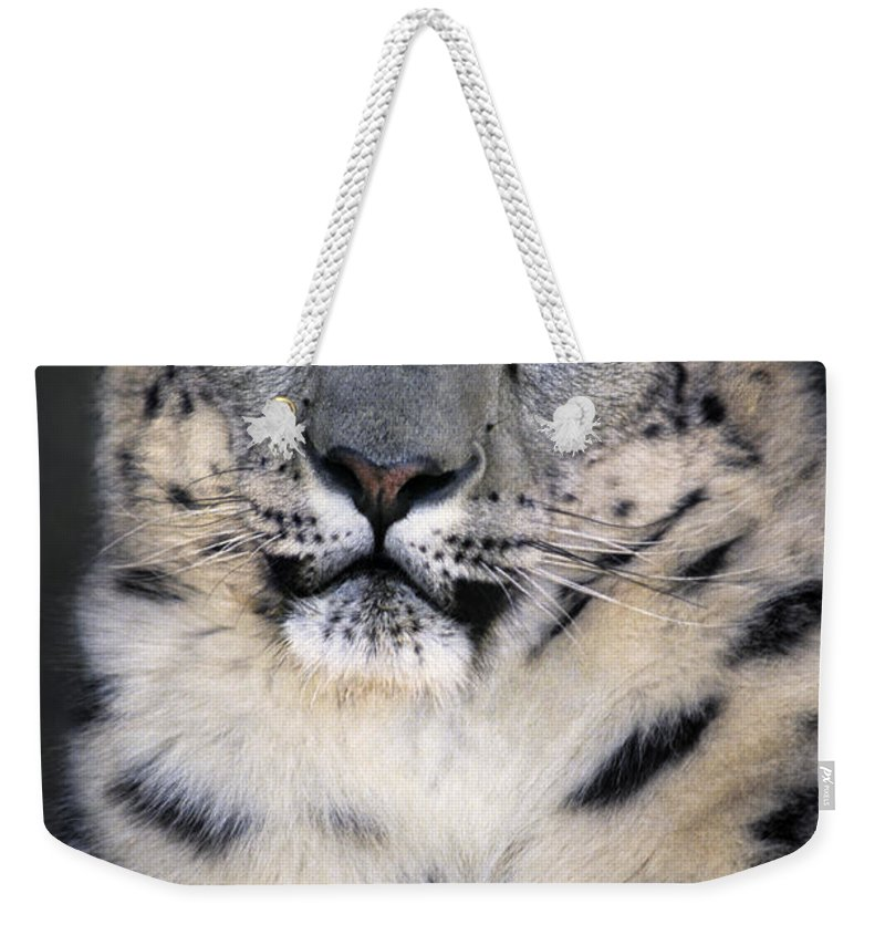 Snow Leopard Weekender Tote Bag featuring the photograph Snow Leopard Portrait Endangered Species Wildlife Rescue by Dave Welling