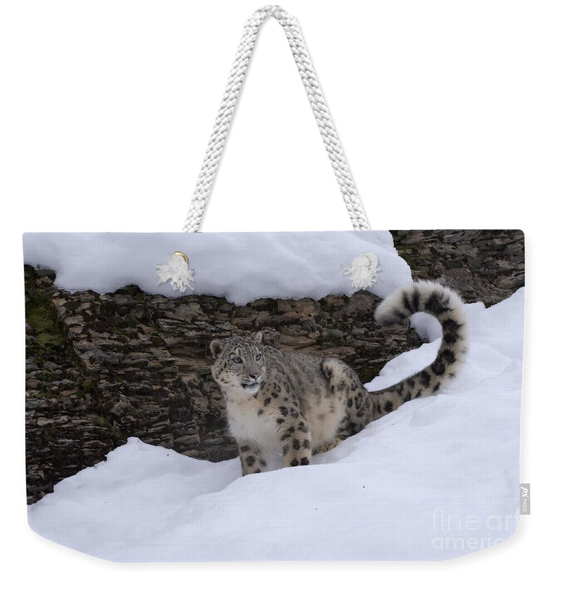 Snow Leopard Weekender Tote Bag featuring the photograph Snow Leopard by Sandra Bronstein
