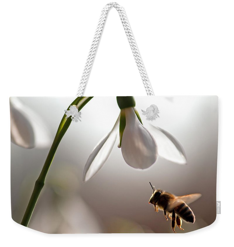 Snowdrops And The Bee Weekender Tote Bag featuring the photograph Snowdrops And The Bee by Torbjorn Swenelius