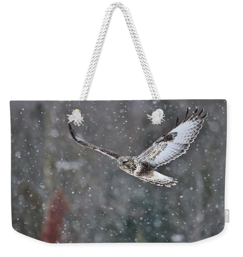 Rough-legged Hawk Weekender Tote Bag featuring the photograph Snowing Flight by Teresa McGill