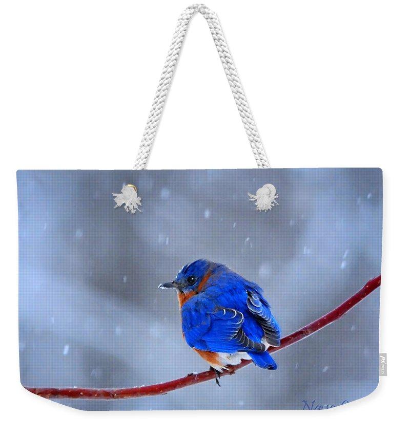 Nature Weekender Tote Bag featuring the photograph Snowy Bluebird by Nava Thompson