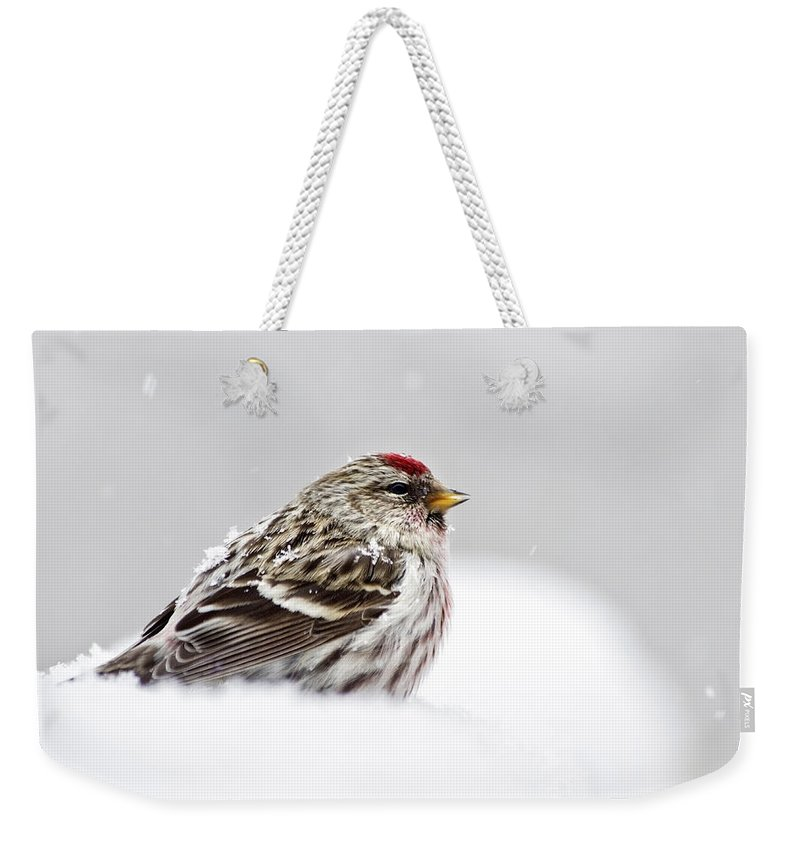 Bird Weekender Tote Bag featuring the photograph Snowy Common Redpoll by Christina Rollo