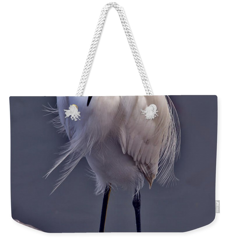 Snowy Egret Weekender Tote Bag featuring the photograph Snowy Egret by David Salter