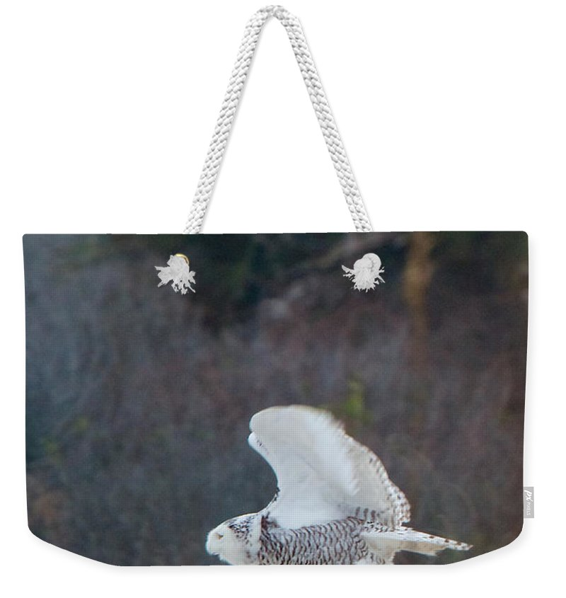 Snowy Owl Weekender Tote Bag featuring the photograph Snowy Owl In Florida 11 by David Beebe