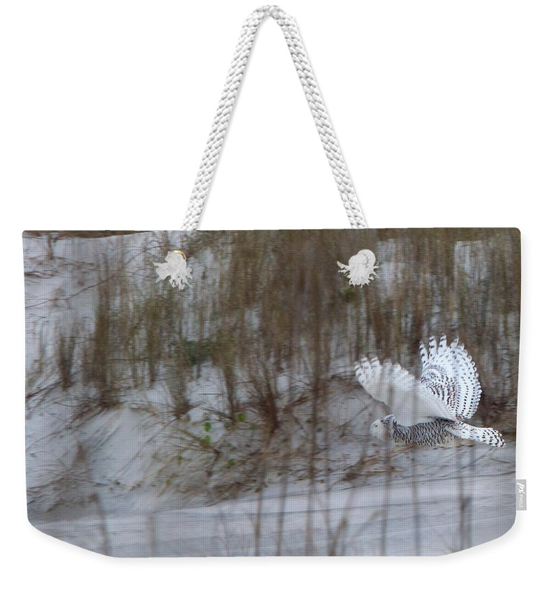 Snowy Owl Weekender Tote Bag featuring the photograph Snowy Owl In Florida 12 by David Beebe