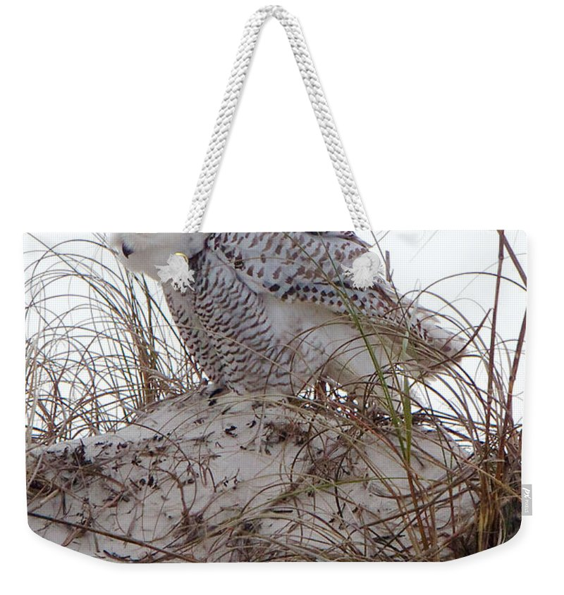 Snowy Owl Weekender Tote Bag featuring the photograph Snowy Owl In Florida 13 by David Beebe
