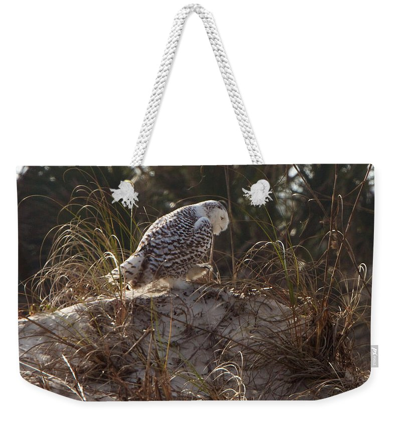 Snowy Owl Weekender Tote Bag featuring the photograph Snowy Owl In Florida 16 by David Beebe