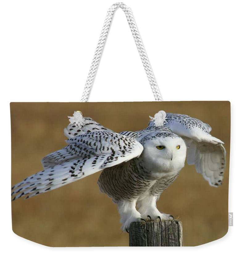 Snowy Owl Weekender Tote Bag featuring the photograph Snowy Owl by Karen Nitz